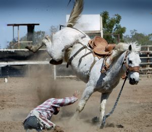 Cowboy falling off bucking bronco